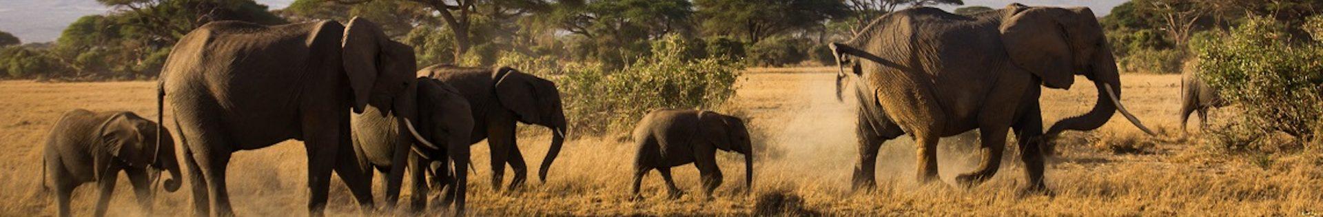 Afrika Safari Perfect Tour