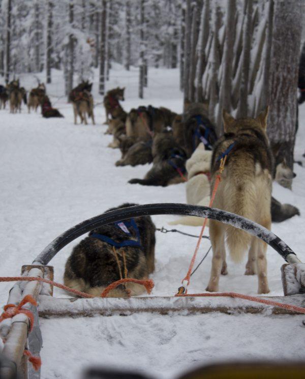 Schneemobi Reise Finnland By Perfect Tours (8)