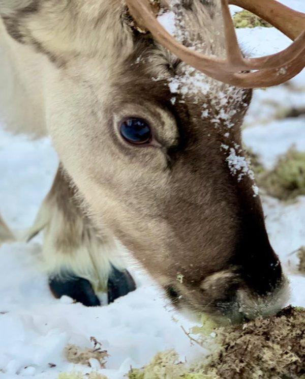 Schneemobil Reise Lappland Perfect Tours (73)