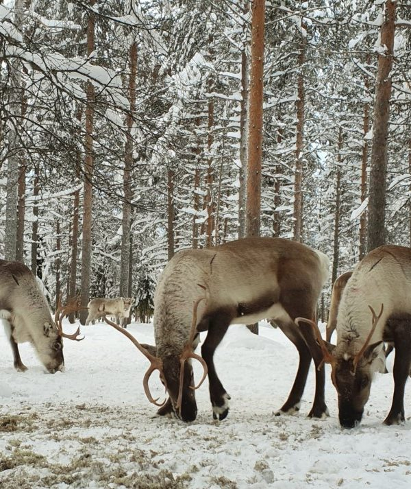 Schneemobil Reise Lappland Perfect Tours (79)