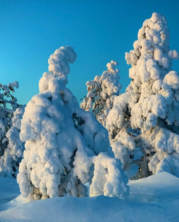 Schneemobil Reise Lappland Perfect Tours (93)