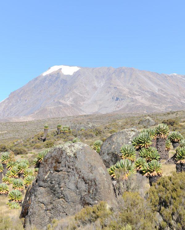 Trekking, Reise, Kilimanjaro, Perfect Tours 1 (12)