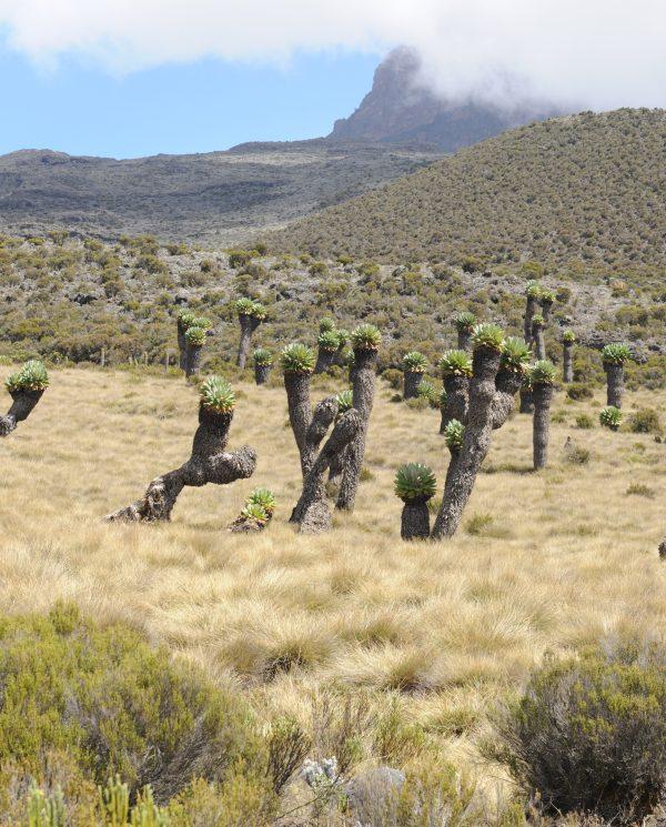 Trekking, Reise, Kilimanjaro, Perfect Tours 1 (18)