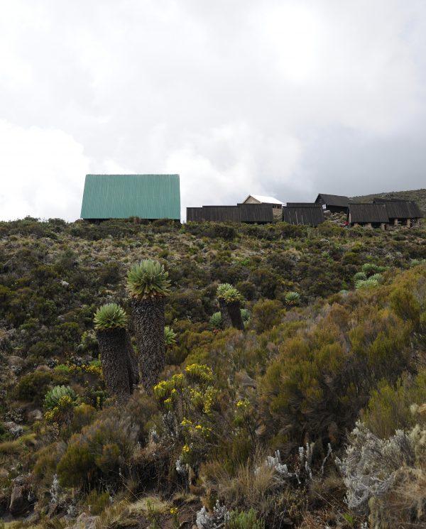 Trekking, Reise, Kilimanjaro, Perfect Tours 1 (24)