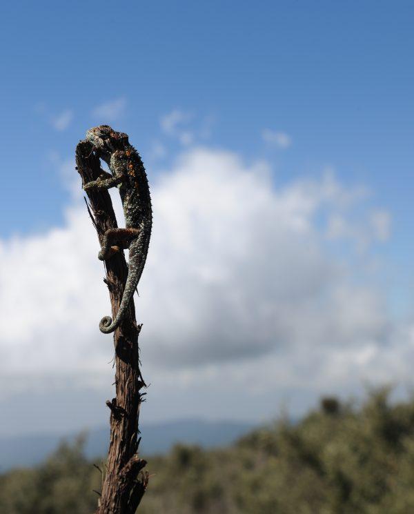 Trekking, Reise, Kilimanjaro, Perfect Tours 1 (26)