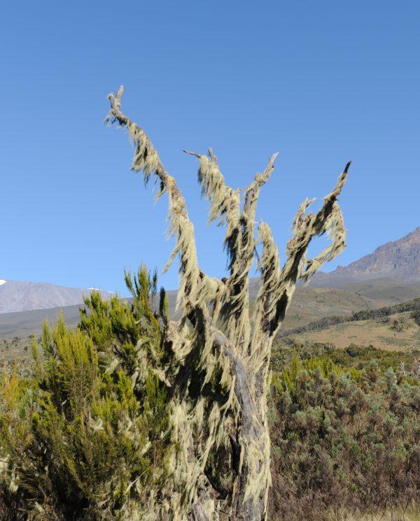 Trekking, Reise, Kilimanjaro, Perfect Tours 1 (27)