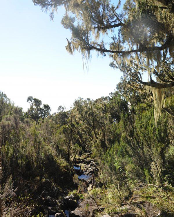 Trekking, Reise, Kilimanjaro, Perfect Tours 1 (28)